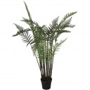 Leatherleaf x22 branches, potted, height 157cm, gr